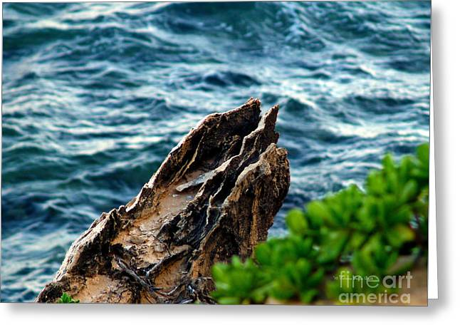 Lithified Greeting Cards - Natures Sculptures VII Greeting Card by Patricia Griffin Brett