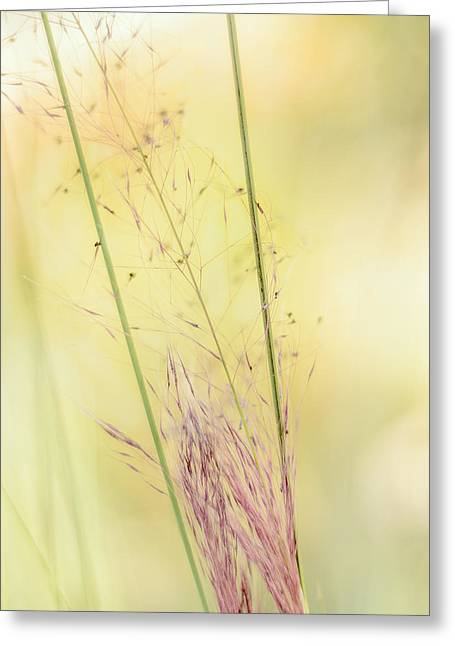 Weed Line Greeting Cards - Natures Serenity Greeting Card by Camille Lopez