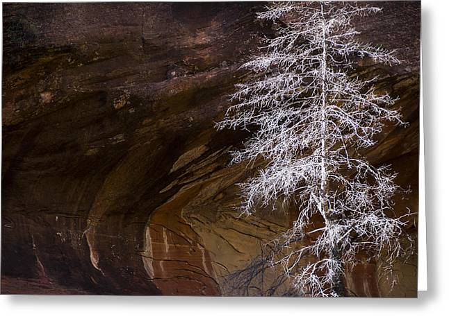 West Fork Greeting Cards - Natures Simplicity  Greeting Card by Saija  Lehtonen