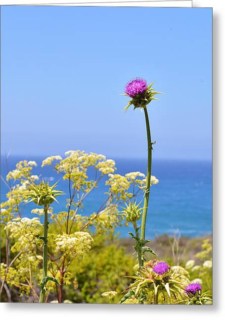 Coast Hwy Ca Greeting Cards - Natures Song Greeting Card by Lynn Bauer