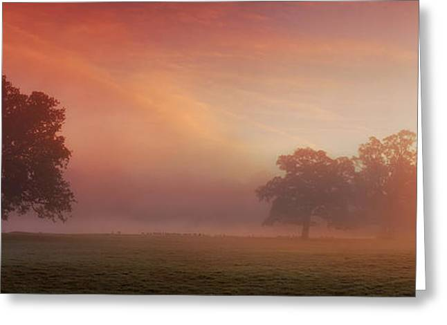 Natures Spectacle Greeting Card by John Chivers