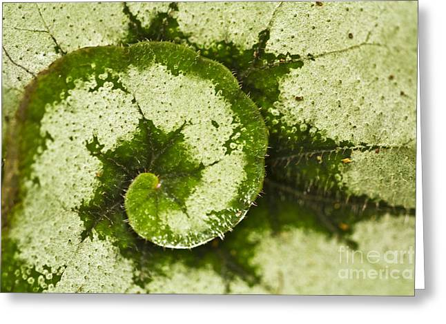 Creativ Greeting Cards - Natures Spiral Greeting Card by Heiko Koehrer-Wagner