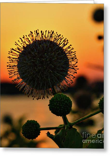 Creative Photography Pictures Greeting Cards - Natures Sunset Greeting Card by Charles Dobbs