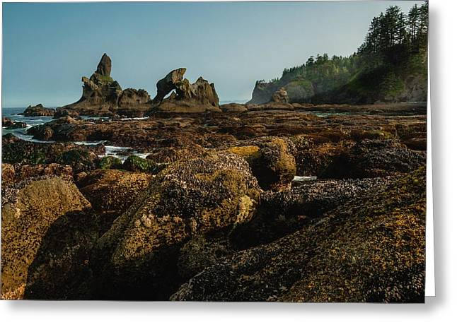 Pnw Greeting Cards - Natures Way Greeting Card by Gene Garnace