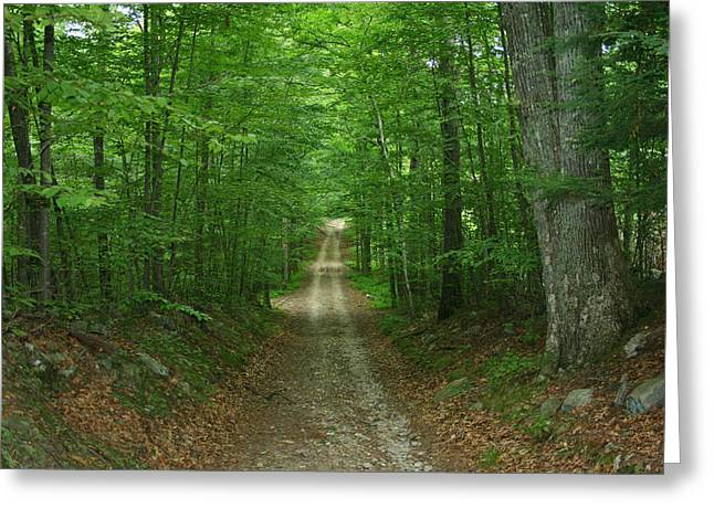 Old Country Roads Greeting Cards - Natures Way at James L. Goodwin State Forest  Greeting Card by Neal  Eslinger