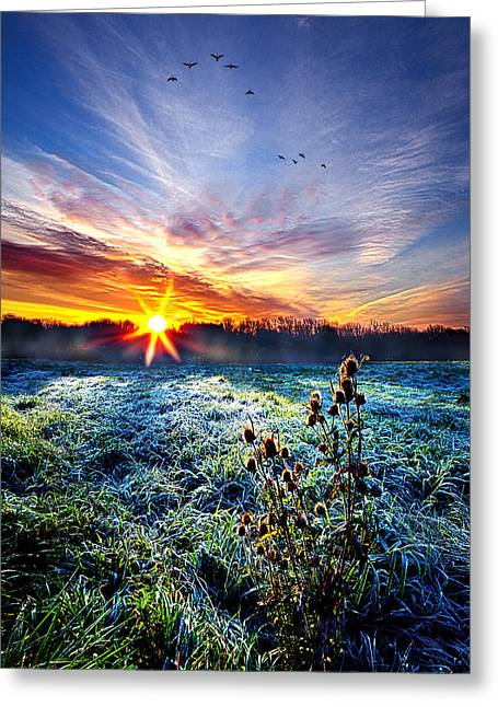 Frost Photographs Greeting Cards - Natures Way Greeting Card by Phil Koch