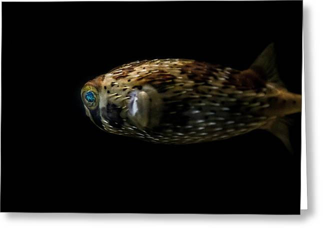 Porcupine Fish Digital Greeting Cards - Naturescape 52 a Greeting Card by  Otri  Park