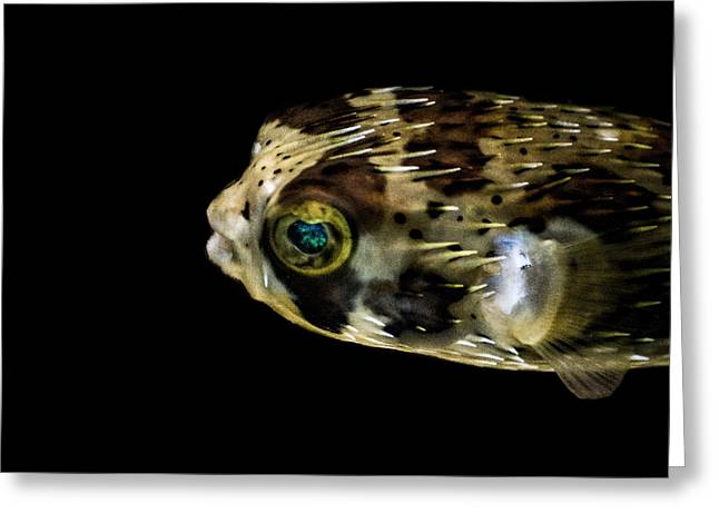 Porcupine Fish Digital Greeting Cards - Naturescape 52 b Greeting Card by  Otri  Park