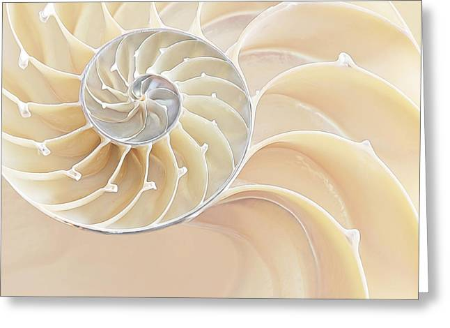 Geometric Artwork Greeting Cards - Nautilus Natural Cream Spiral Greeting Card by Gill Billington