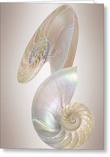 Geometric Artwork Greeting Cards - Nautilus Natural Jewel Of The Sea - Vertical Greeting Card by Gill Billington