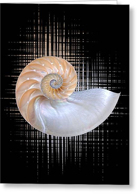 Striking Images Greeting Cards - Nautilus Seashell Abstract - Vertical Greeting Card by Gill Billington
