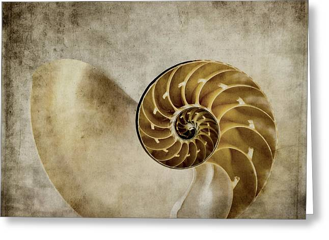 Sea Creature Greeting Cards - Nautilus Shell Greeting Card by Carol Leigh