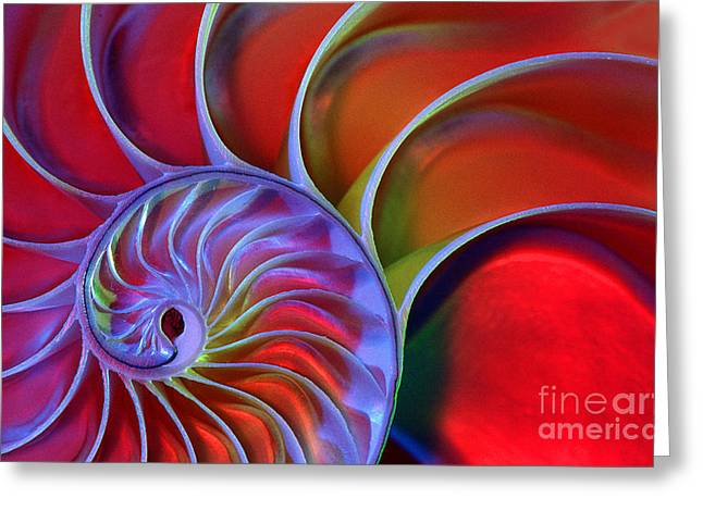 Colored Shell Greeting Cards - Nautilus Shell Greeting Card by James L. Amos