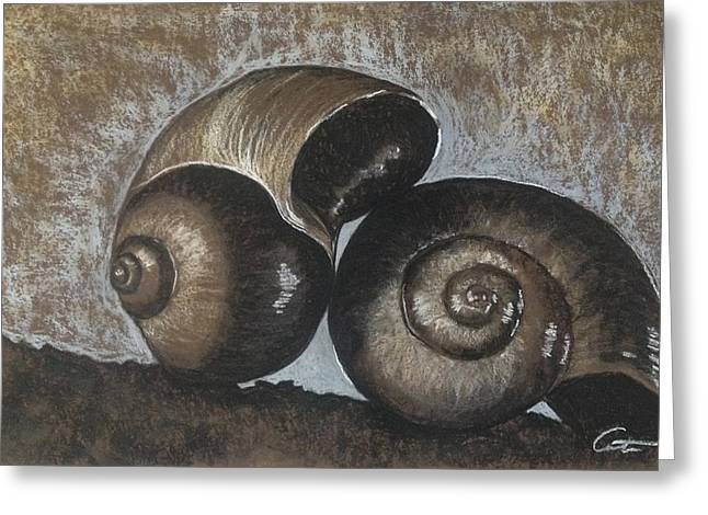 Sea Life Pastels Greeting Cards - Nautilus Shells in Sepia Greeting Card by Cristel Mol-Dellepoort