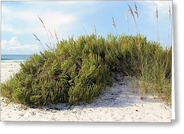 Florida Panhandle Greeting Cards - Navarre Florida Greeting Card by JC Findley
