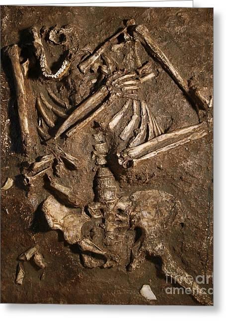 Moshe Greeting Cards - Neanderthal Skeleton, Kebara Cave Greeting Card by Javier Trueba/MSF