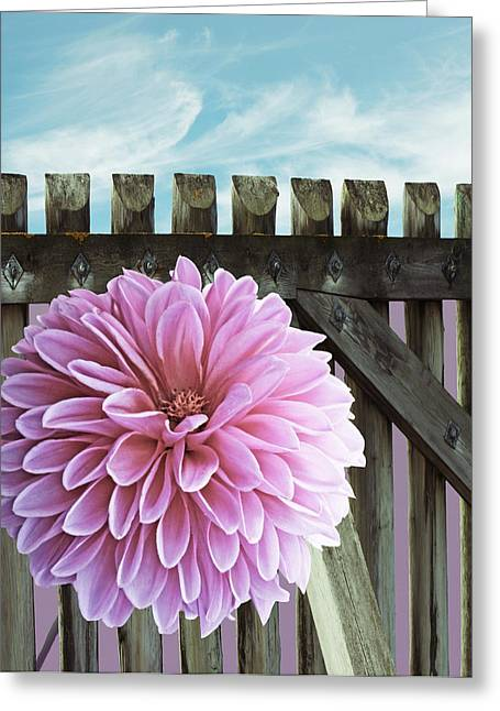 Dagmar Greeting Cards - Near the gardenfence Greeting Card by Dagmar Wassenberg
