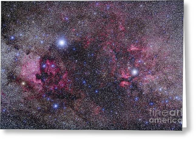 Cygnus Greeting Cards - Nebulosity In Cygnus Greeting Card by Alan Dyer