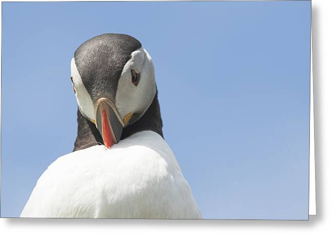 Need To Look My Best Greeting Card by Anne Gilbert