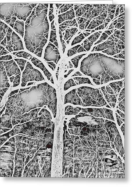 Reverse Art Greeting Cards - Negative Image Black and White Tree Branches Abstract Design Greeting Card by Adri Turner