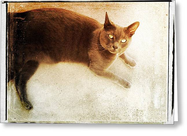 Usa Tapestries - Textiles Greeting Cards - Neighborhood Cat Greeting Card by John Castell