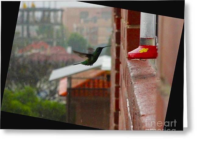 Sleet Greeting Cards - Neither Rain Nor Sleet  Greeting Card by Al Bourassa