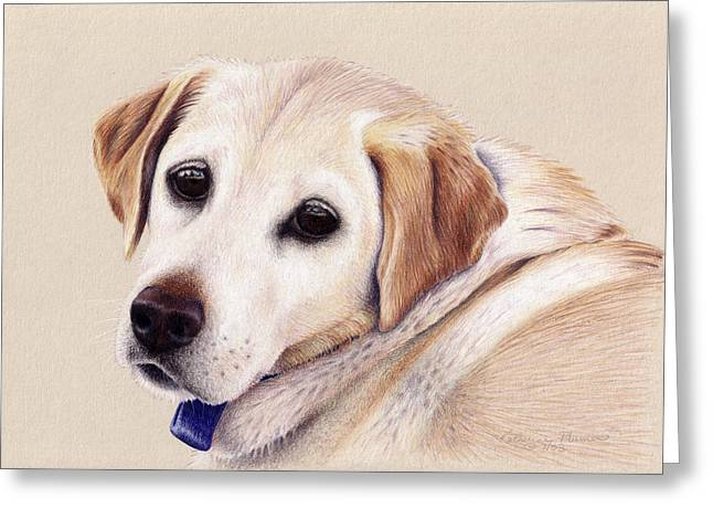 Labs Drawings Greeting Cards - Nellie Greeting Card by Katherine Plumer