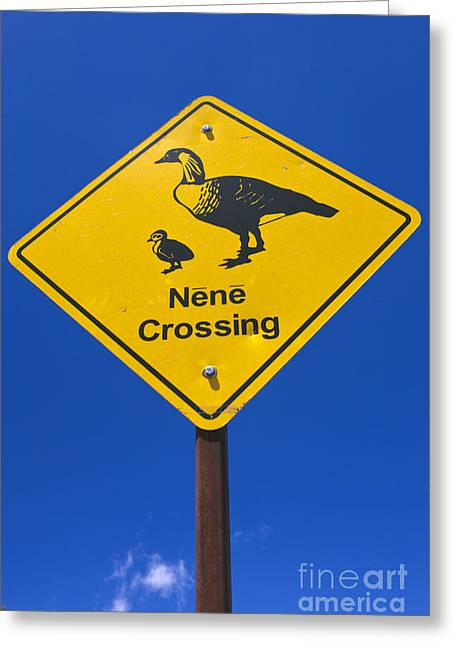 Popular Goose Images Greeting Cards - Nene Crossing Sign Haleakala National Park Greeting Card by Jason O Watson