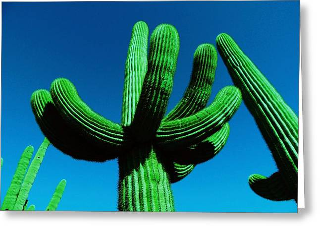 Catus Neon Colors Green Blue Photographs Greeting Cards - Neon Catus Greeting Card by Todd Sherlock