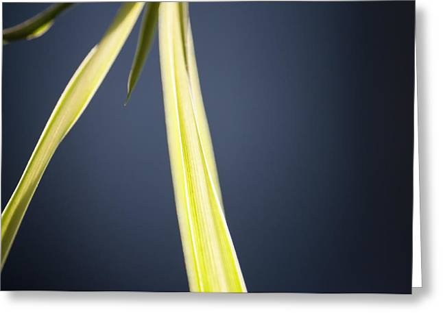 Neon Colors Greeting Cards - Neon Spider Greeting Card by Ross Powell