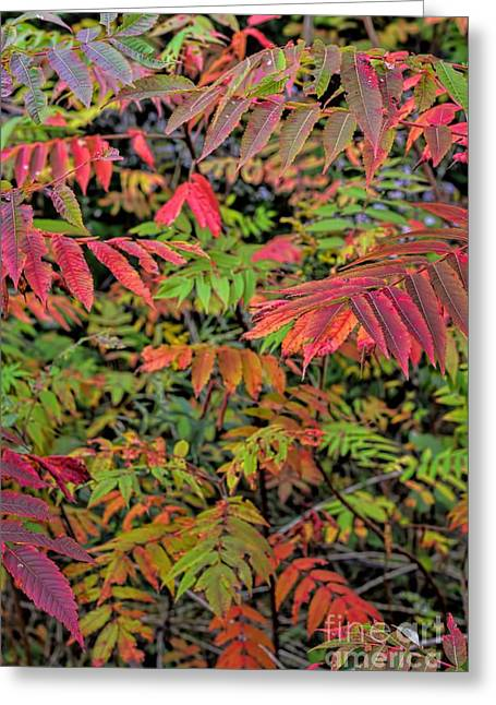 A Summer Evening Greeting Cards - Neon Sumac - Autumn Greeting Card by Henry Kowalski