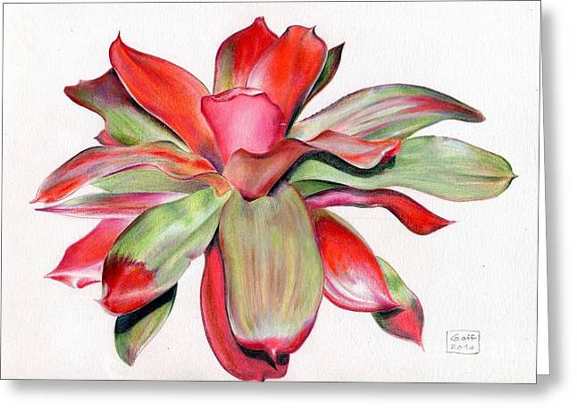 Bromeliad Neoregelia Greeting Cards - Neoregelia Magali Greeting Card by Penrith Goff