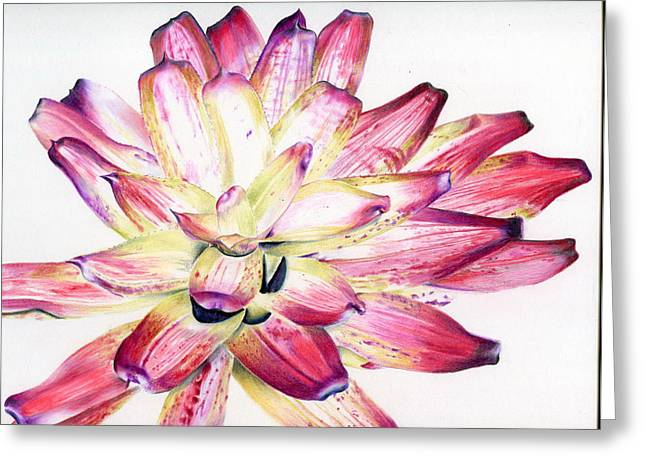 Bromeliad Neoregelia Greeting Cards - Neoregelia Picasso Greeting Card by Penrith Goff