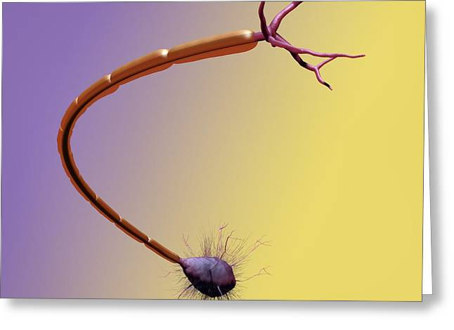 Ranvier Greeting Cards - Nerve Cell, Artwork Greeting Card by Tim Vernon