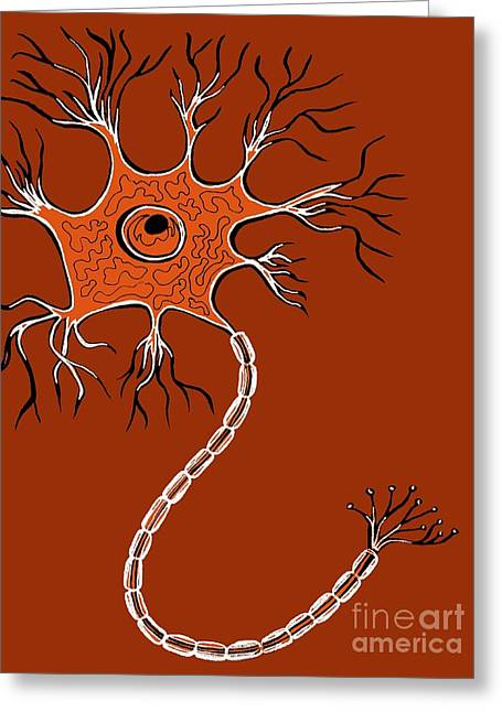 Ranvier Greeting Cards - Nerve Cell, Illustration Greeting Card by Claudia Stocker