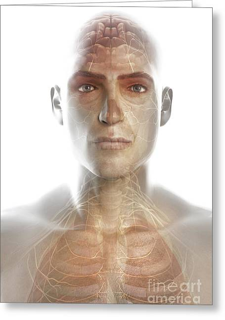Cerebral Hemisphere Greeting Cards - Nerves Of The Head And Neck Greeting Card by Science Picture Co
