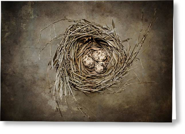 Nesting Greeting Cards - Nest Eggs Greeting Card by Carol Leigh