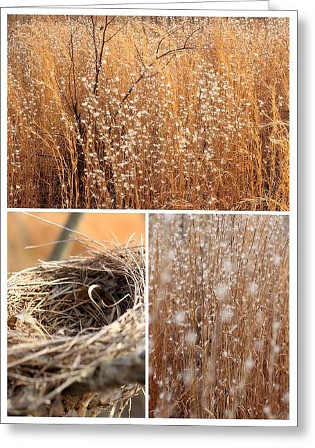 Famous Artist Greeting Cards - Nest Field Greeting Card by AR Annahita