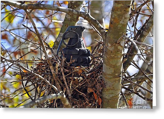 Quirky Greeting Cards - Nest Frag Greeting Card by Al Powell Photography USA