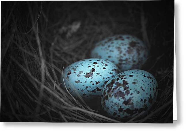 Dotted Shells Greeting Cards - Nest of 3  Greeting Card by Trish Mistric