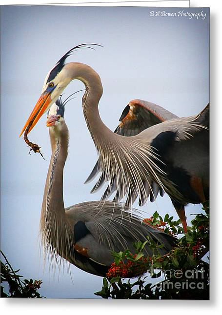 Birdwatching. B A Bowen Photography Greeting Cards - Nestbuilding Greeting Card by Barbara Bowen