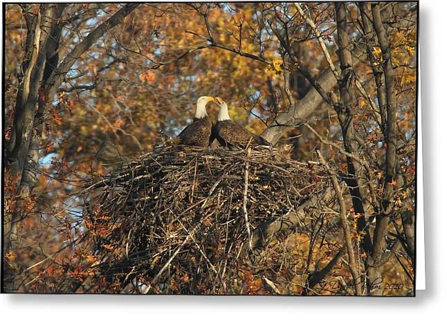 Eagle Pyrography Greeting Cards - Nesting Bald Eagles Greeting Card by Daniel Behm