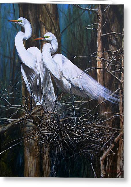 Snowy Egret Greeting Cards - Nesting Snowy Egrets Greeting Card by Rob Dreyer AFC
