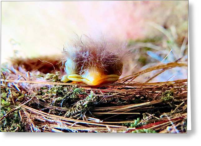 Swallow Nestlings Greeting Cards - Nesting Sweetness Greeting Card by Michelle Milano