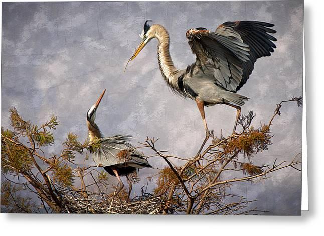 Nesting Time Greeting Card by Debra and Dave Vanderlaan
