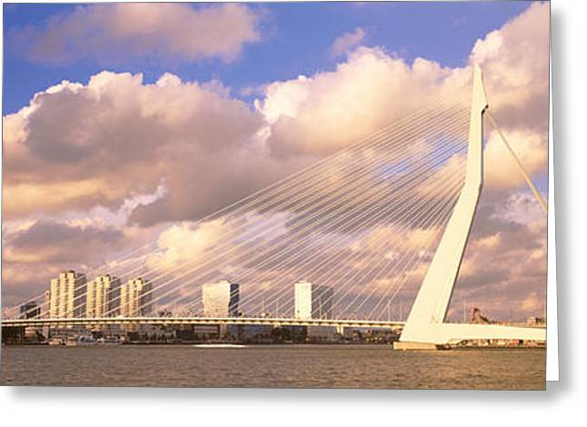 Swans... Greeting Cards - Netherlands, Holland, Rotterdam Greeting Card by Panoramic Images