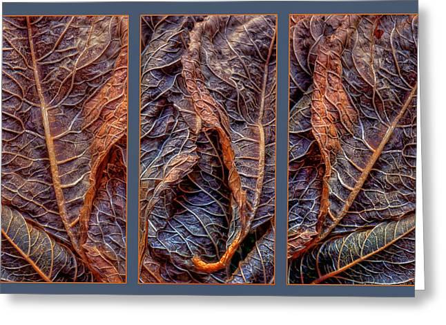 Dried Hydrangeas Greeting Cards - Networks Greeting Card by Nikolyn McDonald