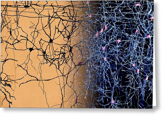 Neuron Network Greeting Card by Juan Gaertner