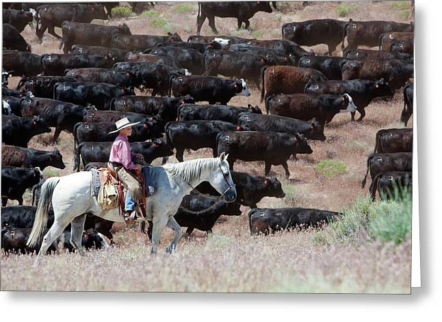 Nevada Cowboy Herding Cattle Greeting Card by Jim West