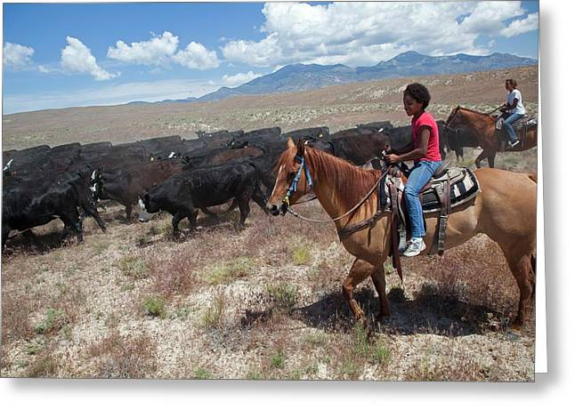 Nevada Cowgirls Herding Cattle Greeting Card by Jim West